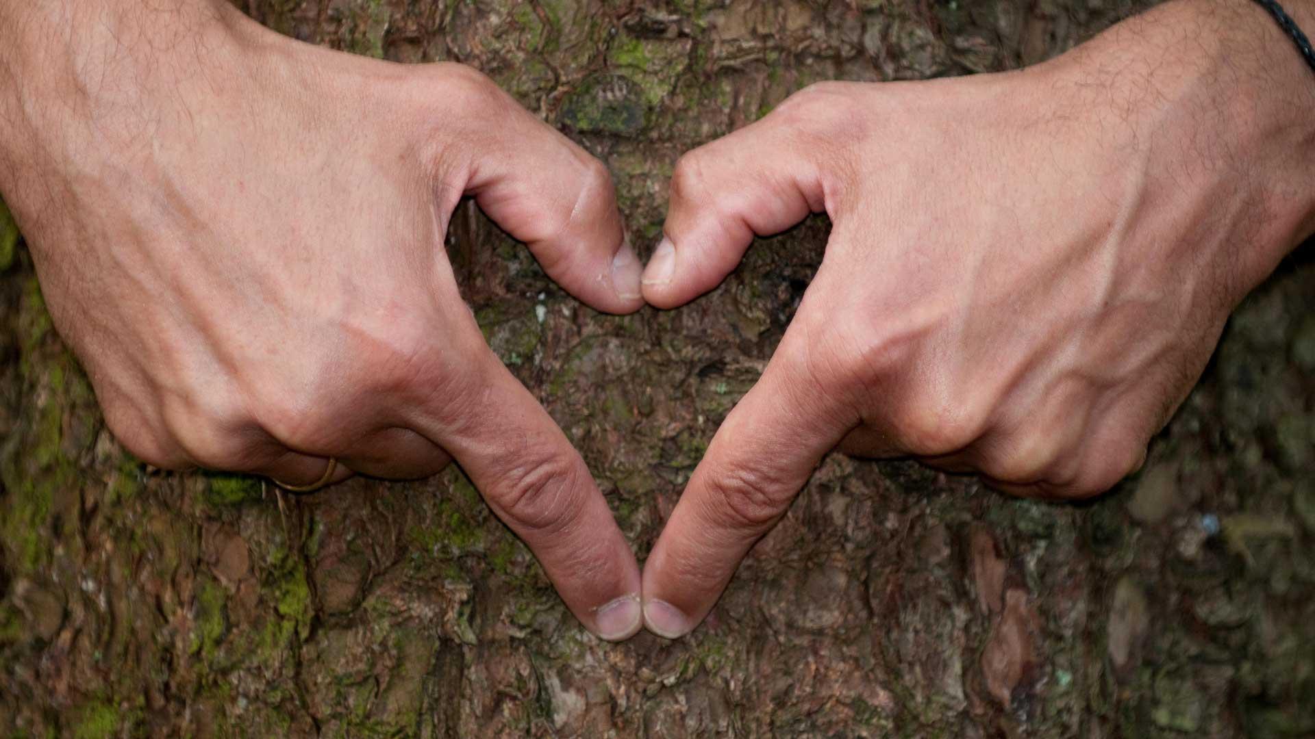 Herz-auf-Holz--