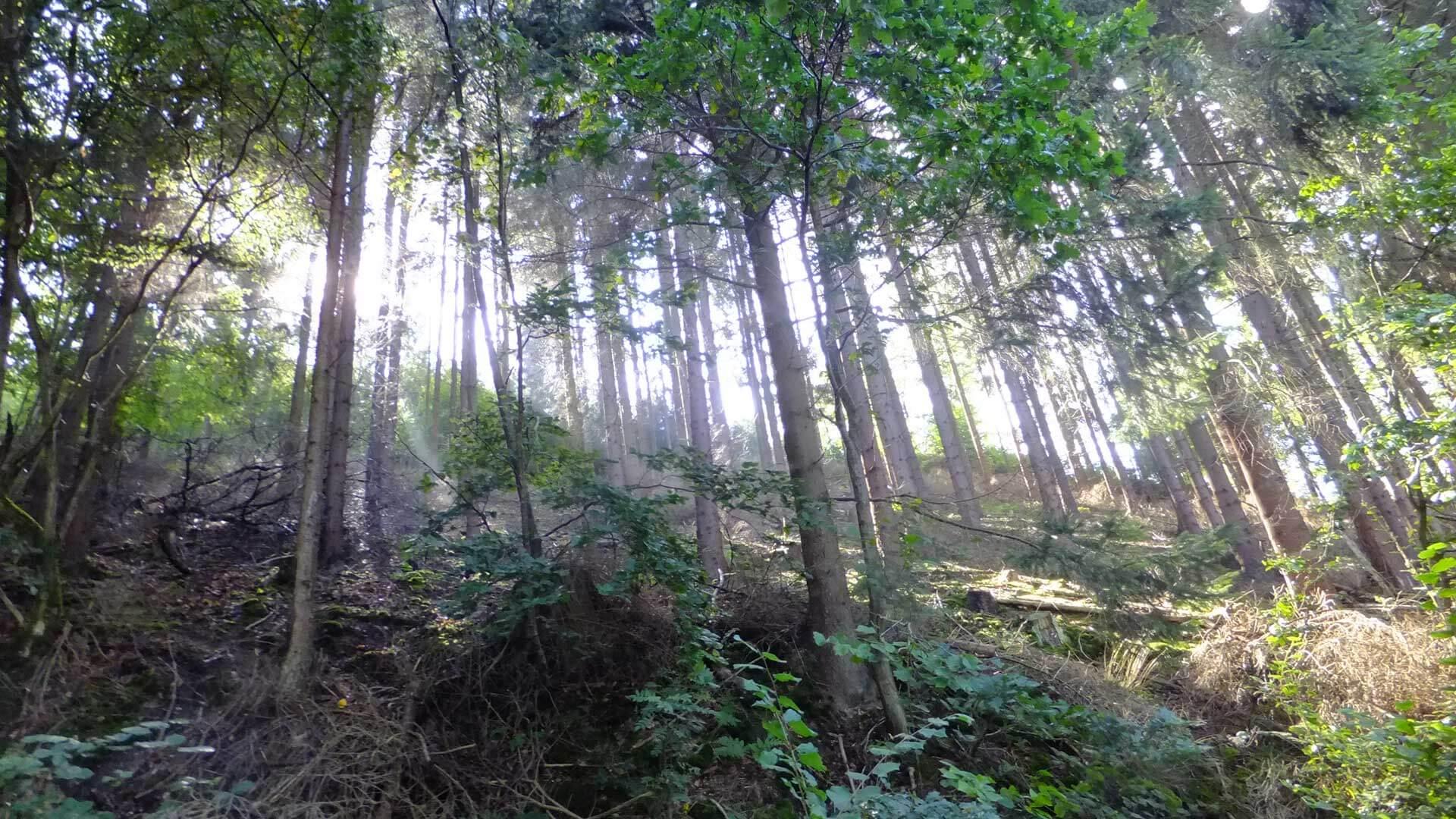 Wandern im Sauerland Wald mit Sonnenstrahlen